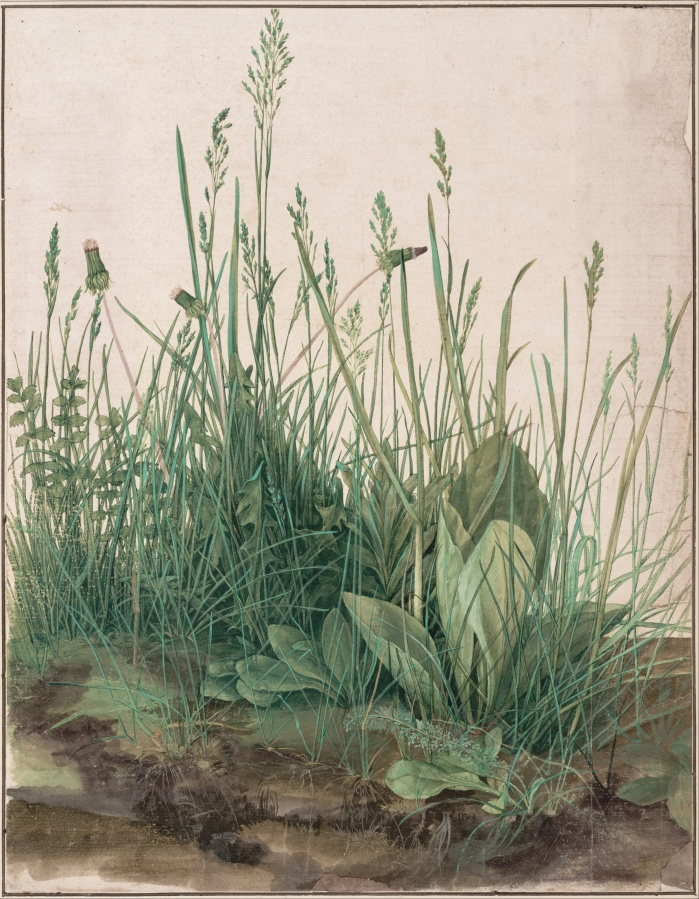 albrecht_dc3bcrer_-_the_large_piece_of_turf2c_1503_-_google_art_project