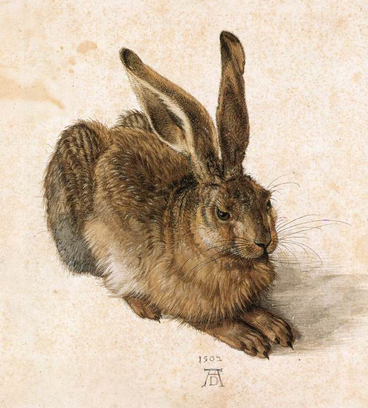 albrecht_dc3bcrer_-_young_hare_-_wga07362