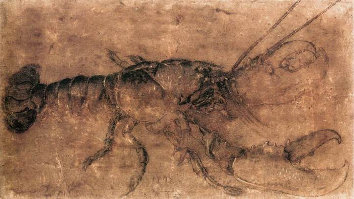 durer-homard